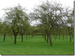 2011 13 04 Orchard