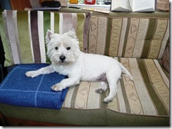 Dog Sitting!